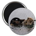 California Sea Otter Magnets