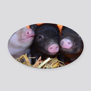 3 little micro pigs Oval Car Magnet