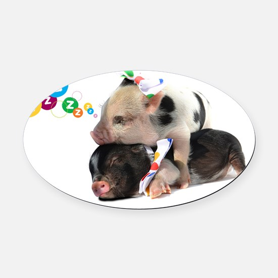 micro pigs sleeping Oval Car Magnet