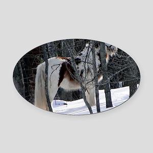 Gypsy Gelding in Winter Setting Oval Car Magnet