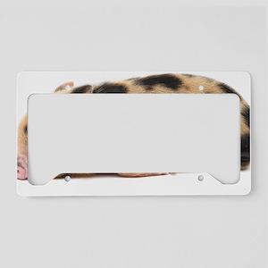 Micro pig sleeping License Plate Holder