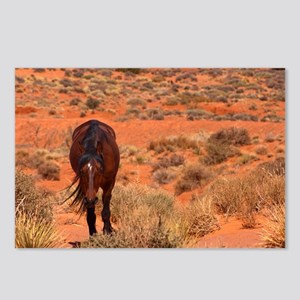 Wild Horse Postcards (Package of 8)