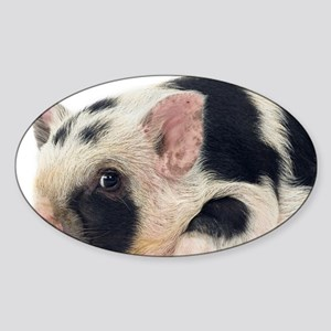 Micro pig chilling out Sticker (Oval)