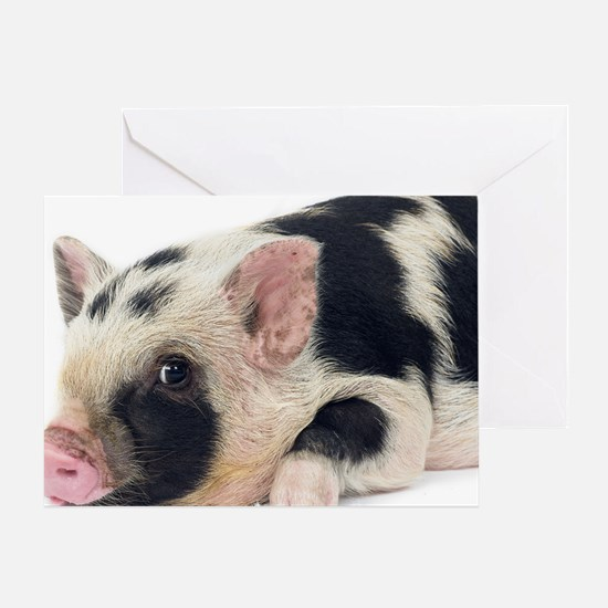 Micro pig chilling out Greeting Card