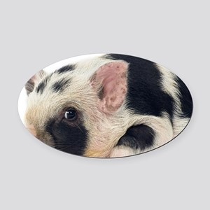 Micro pig chilling out Oval Car Magnet