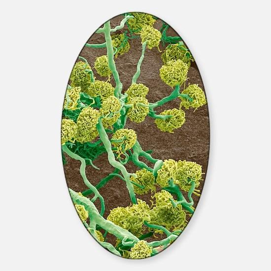Kidney glomeruli, SEM Sticker (Oval)