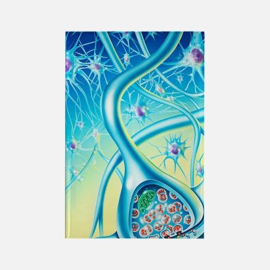 Nerve synapse Rectangle Magnet
