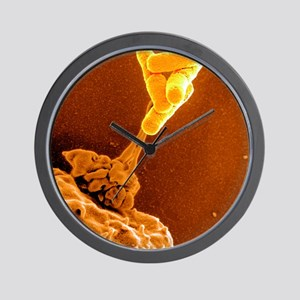 Neutrophil cell and bacteria, SEM Wall Clock