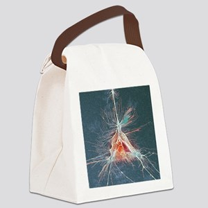 Nerve support cell, SEM Canvas Lunch Bag