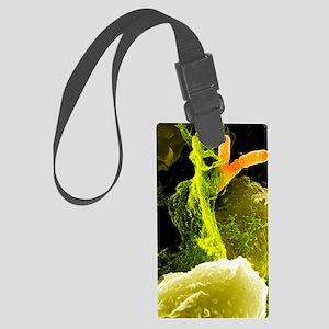 Neutrophils and Shigella bacteri Large Luggage Tag