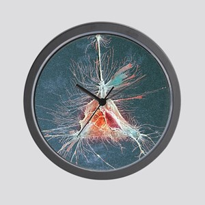 Nerve support cell, SEM Wall Clock