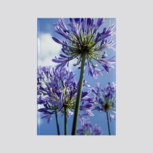 African lilies (Agapanthus sp.) Rectangle Magnet