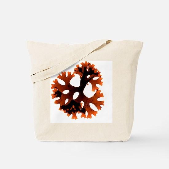 Carrageen red seaweed Tote Bag