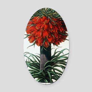 Crown imperial plant Oval Car Magnet