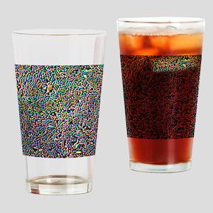 Salmonella bacteria, SEM Drinking Glass
