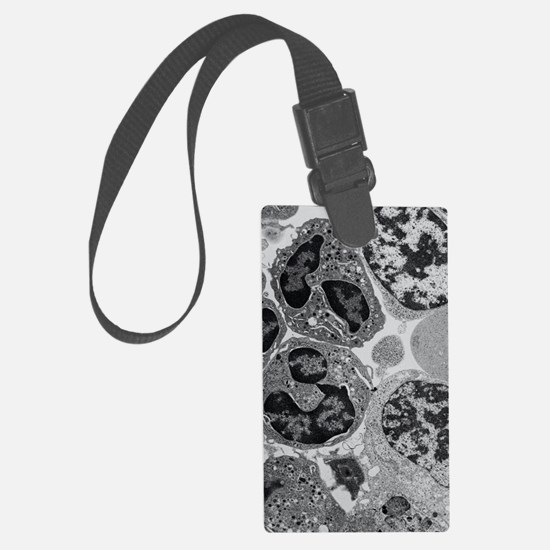 TEM of blood cell precursors in  Luggage Tag