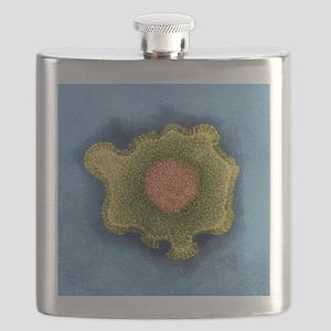 Herpesvirus, TEM Flask