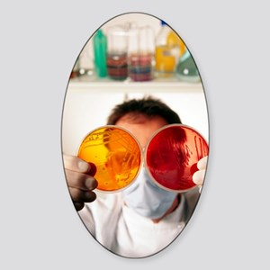 Technician with bacterial cultures  Sticker (Oval)