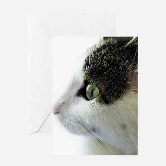 Green Eyed White Tabby Cat Starring Greeting Card