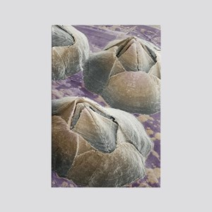 Acorn barnacles, SEM Rectangle Magnet