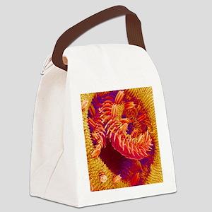 Butterfly proboscis, SEM Canvas Lunch Bag