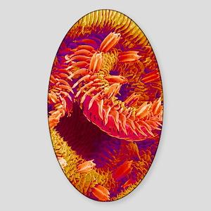 Butterfly proboscis, SEM Sticker (Oval)