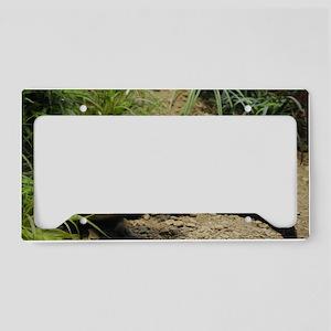 Weasel License Plate Holder