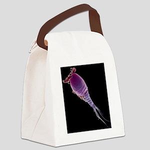 Cyclops sp. copepod, SEM Canvas Lunch Bag