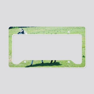 Lama in the pasture License Plate Holder