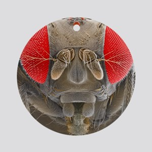 Fruit fly, SEM Round Ornament