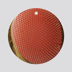 Fruit fly compound eye, SEM Round Ornament