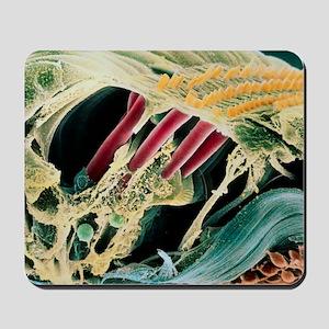 Inner ear organ of Corti Mousepad