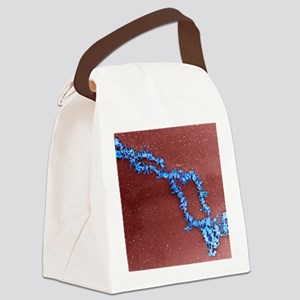 Lampbrush chromosomes, TEM Canvas Lunch Bag