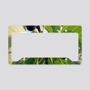 Figs License Plate Holder