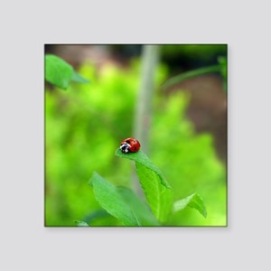 "Red Ladybug on Green Leaf Square Sticker 3"" x 3"""