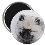 Keeshond Puppy (Drawing) Magnet