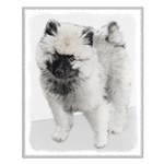 Keeshond Puppy (Drawing) Small Poster