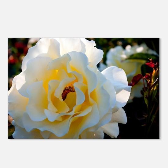 Rose Garden Postcards (Package of 8)