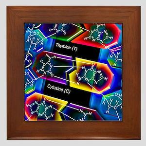 DNA molecule Framed Tile