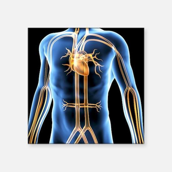 "Human cardiovascular system Square Sticker 3"" x 3"""