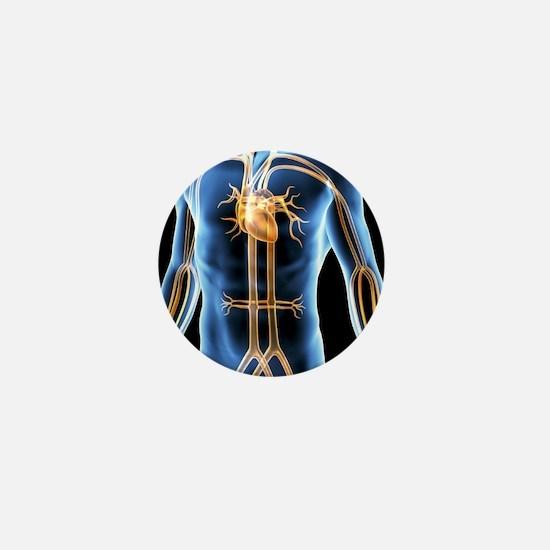 Human cardiovascular system, artwork Mini Button