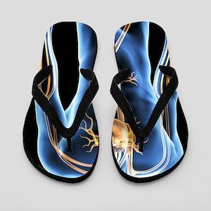 Human cardiovascular system, artwork Flip Flops