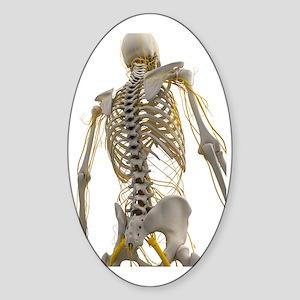 Human nervous system, artwork Sticker (Oval)
