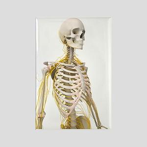 Human nervous system, artwork Rectangle Magnet