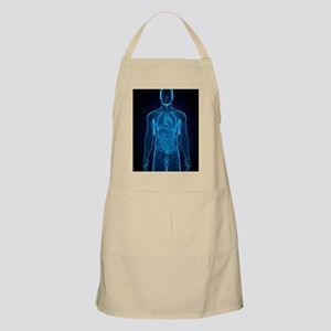Male anatomy, artwork Apron
