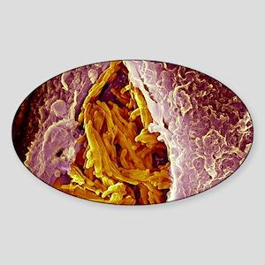 Macrophage engulfing tuberculosis v Sticker (Oval)