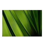 Daffodil Stems Postcards (Package of 8)
