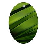 Daffodil Stems Oval Ornament