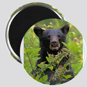 Bear Face Magnets