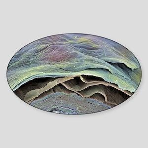 Skin layers, SEM Sticker (Oval)